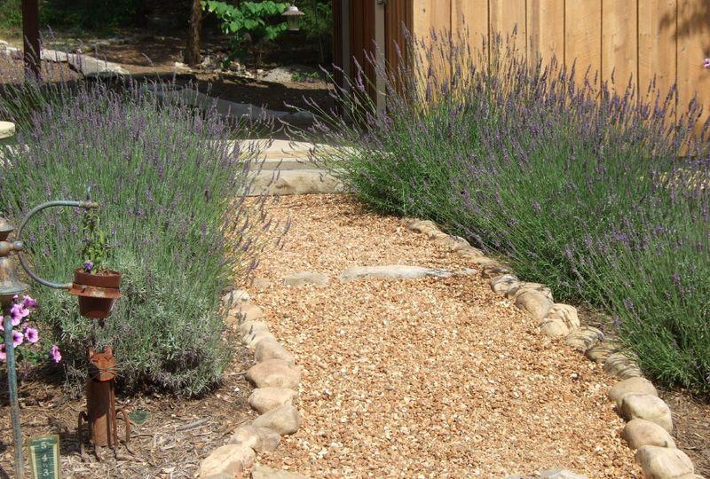 Lavender Path 6-10-09 (2)