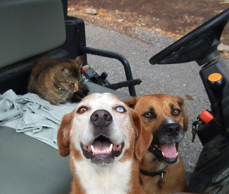 Kaya & Dogs 7-12-09