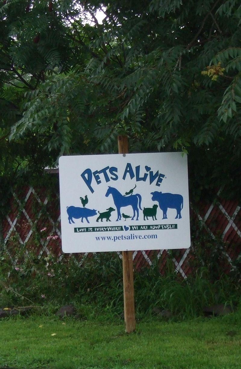 Pets Alive sign