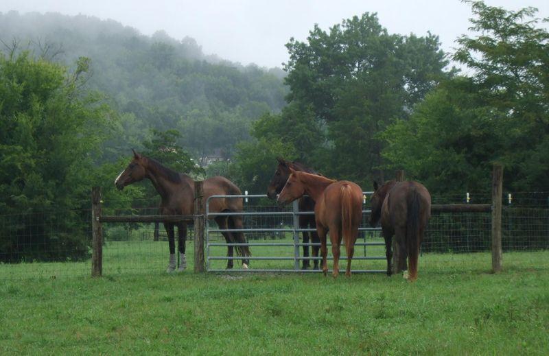 Horses 8-5-09