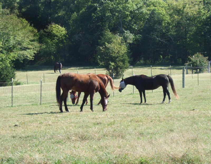 Horses 9-30-09
