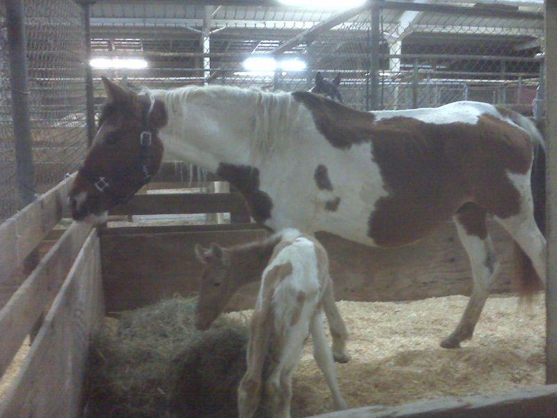 Mare Foal Seizure 11-24-09