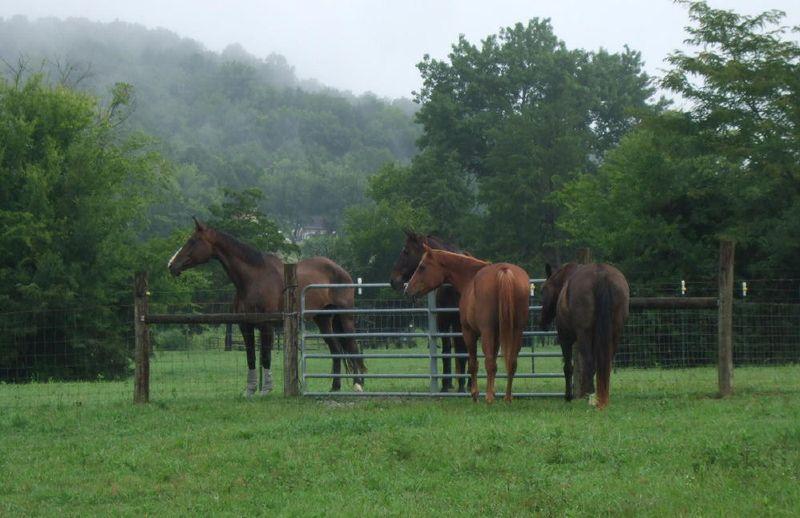 Horses 8-5-09 (2)
